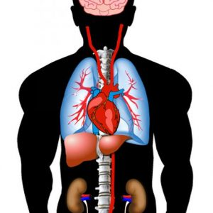 98TARGET (Spindicator Vital Organ)